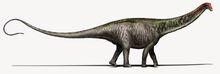 Brontosaurus Copyright DavideBonadonna-1.0