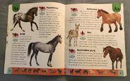 Horse Dictionary (1)