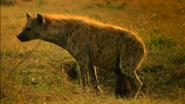 SRNGTI Hyena