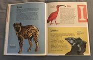 The Dictionary of Ordinary Extraordinary Animals (22)