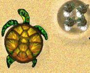 Turtle-jumpstart-preschool