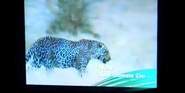Ultimate Zoo Leopard