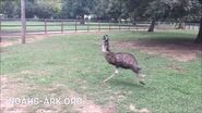 Windy Emu