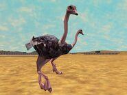 Zt2-ostrich