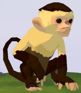 Capuchin Monkey WOZ
