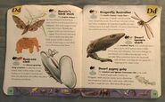 Extreme Animals Dictionary (6)
