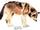 Kenai Peninsula Wolf