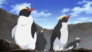 JEL Rockhopper Penguins