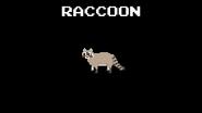 KPS Raccoon