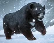 Planet Zoo Black Bear