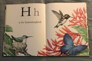 The A to Z Book of Wild Animals (7)