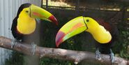 Toucans on a tree branch
