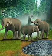 ZT-Asian Elephant