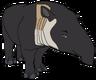 Barry the Baird's Tapir