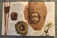 DK Encyclopedia Of Animals (15)