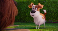 Secret-life-pets-disneyscreencaps.com-7846