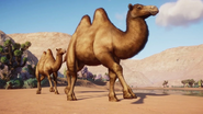 BactrianCamel (Planet Zoo)