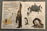 DK Encyclopedia Of Animals (128)