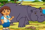 G,D,D! Hippo