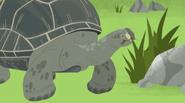 Galapagos Giant Tortoise (Wild Kratts)