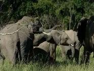 HugoSafari - Elephant19
