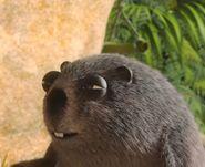 JungleBunchGroundhog
