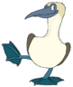 Niki the Blue-Footed Booby