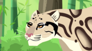 Clouded Leopard (1)