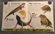 Reptiles and Amphibians Dictionary (4)