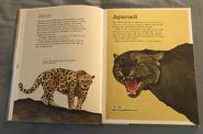 The Dictionary of Ordinary Extraordinary Animals (24)