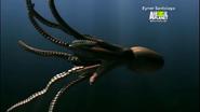 UTAUC Octopus