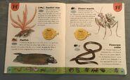 Weird Animals Dictionary (6)
