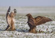 Angry birds 1 V393092302