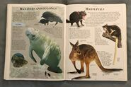 DK Encyclopedia Of Animals (111)