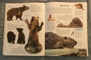 DK Encyclopedia Of Animals (44)