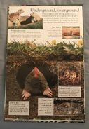 Mammals (Eye Wonder) (7)