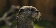 WBAZ Otter