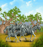 ZT-Plains Zebra