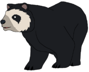 Andy the Andean Bear
