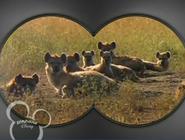 Little Einsteins Hyenas