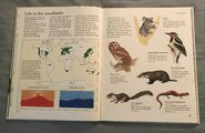 Macmillan Animal Encyclopedia for Children (8)