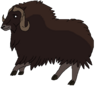 Vincent the Muskox