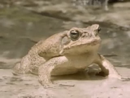 Amazing-animals-activity-center-toad