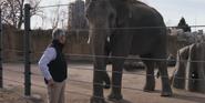 Denver Zoo Elephant