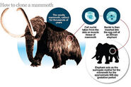 How to Become a Woolly Mammoth