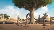 JungleBunch Meerkats