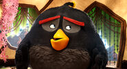Bomb the Black Bird