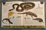 Reptiles and Amphibians Dictionary (2)
