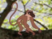 Rileys Adventures Vervet Monkey