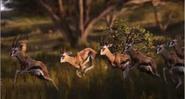 TLK 2019 Gazelles